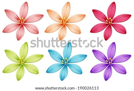 illustration of the six flowers