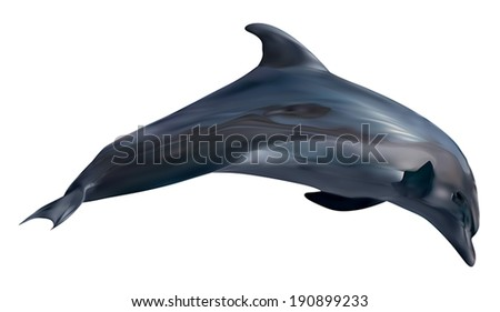 illustration with dolphin