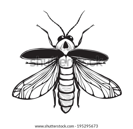 firefly insect black inky