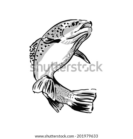 drawing trout vector