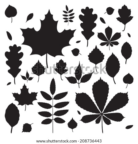 vector set of different autumn