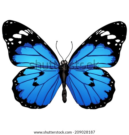 vector cartoon blue butterfly