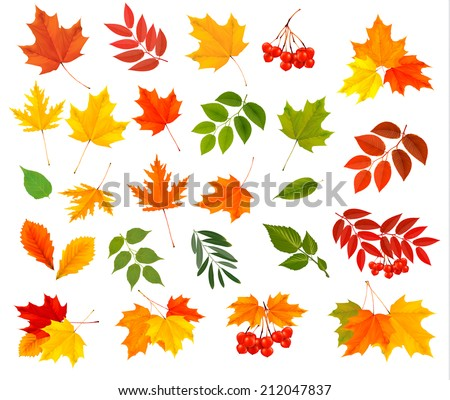 set of colorful autumn leaves