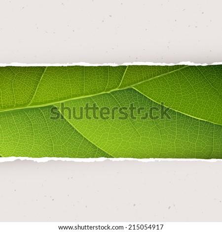 green leaf texture under torn