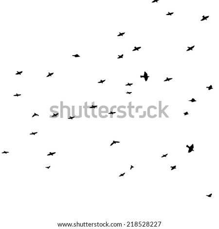 starlings flying bird vector
