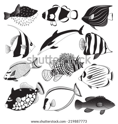 marine fish collection