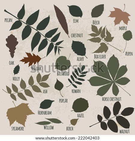 vector silhouettes of leaves