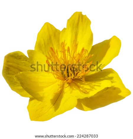 yellow vector flower isolated