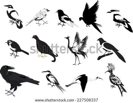black silhouette of bird set