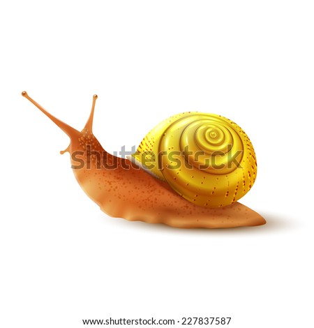 colored small snail mollusk