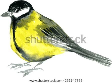 watercolor drawing bird  robin