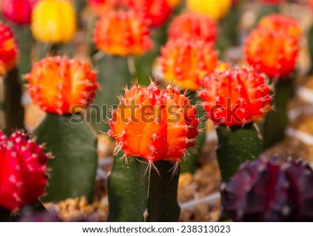 colorful cactus a close up