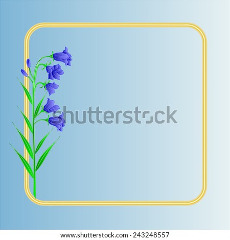 bluebell  campanula meadow
