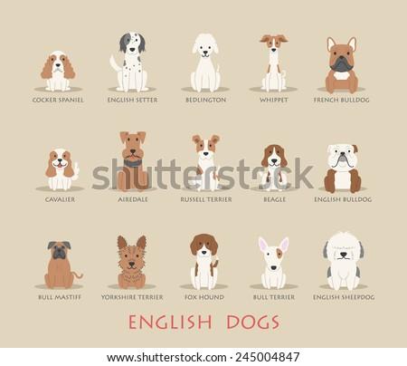 set of english dogs   eps10