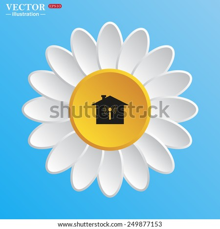 white daisy on a blue