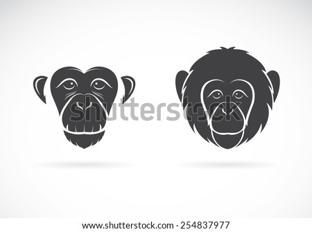 vector image of monkey face on