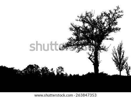 silhouette of trees with bare