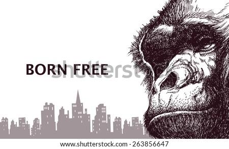 head gorilla hand drawn