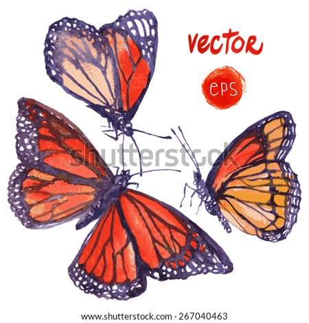 vector butterfly painted in