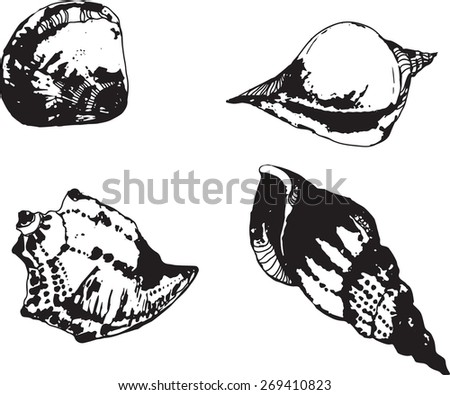 vector set with sea shells