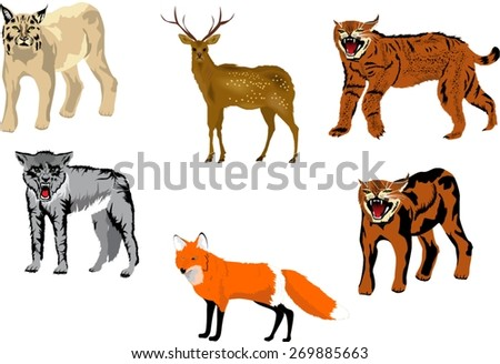 animals of northern forest
