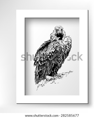 artwork of griffon vulture