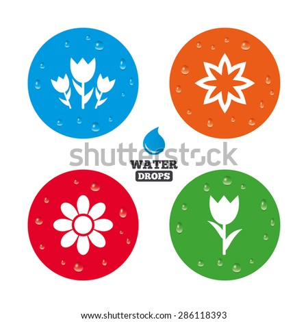 water drops on button flowers