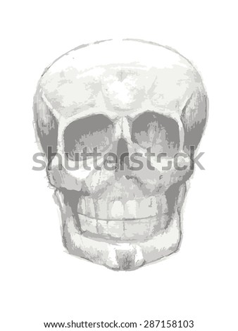 grayscale skull on white