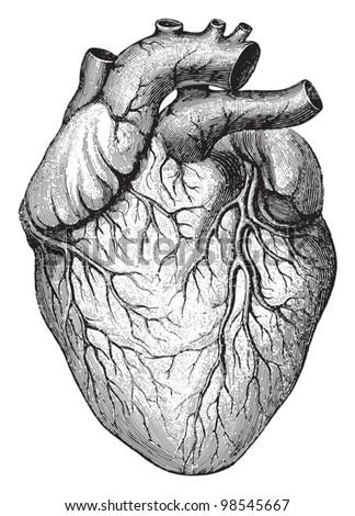 human heart   vintage