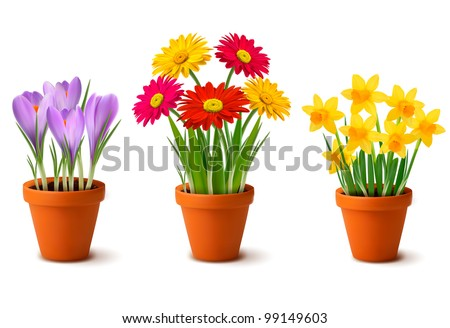 spring colorful flowers in pots