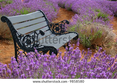 a bench in a lavender field - stock photo