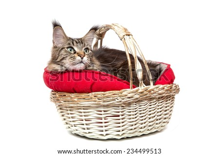 ,a Cat in a basket on a white background - stock photo