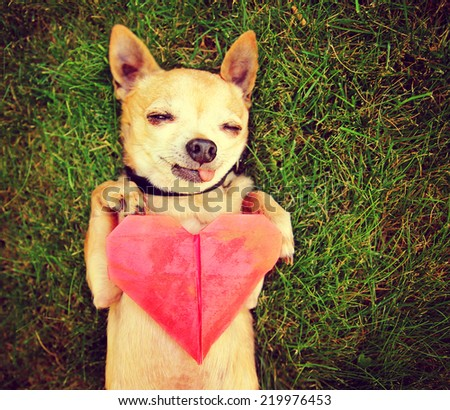a cute chihuahua holding an origami paper heart toned with a retro vintage instagram filter effect (focus in on the heart) shallow DOF  - stock photo