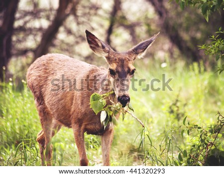 a cute deer grazing in a local park on a branch of leaves  - stock photo
