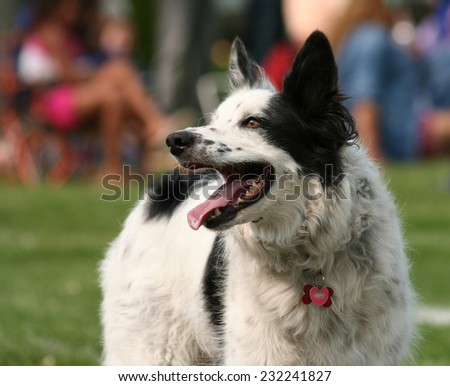 a cute dog in the grass at a park during summer  - stock photo