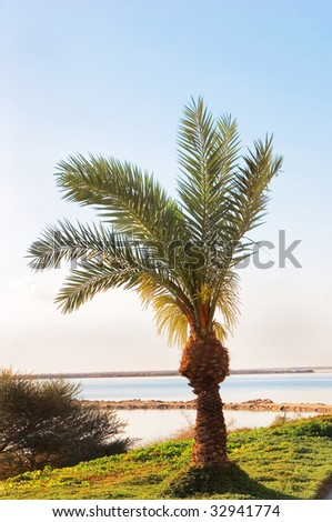 A lawn and a palm tree on quay near a medical beach on the Dead Sea - stock photo