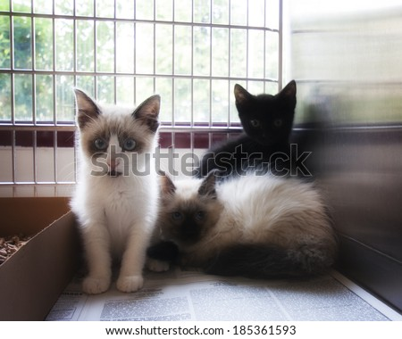 a litter of tiny kittens in an animal shelter, waiting for a home with a soft glow filter - stock photo