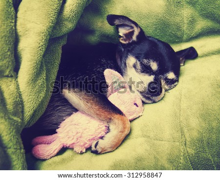 a tiny chihuahua cuddling with his pink bunny stuffed animal toy under a green blanket toned with a retro vintage instagram filter app or action effect - stock photo