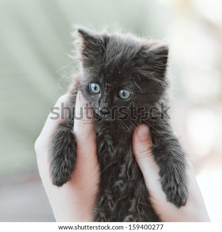 a tiny kitten being held by two hands vintage toned - stock photo