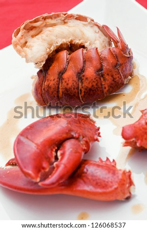 """Absolute Lobster"" served on a white dish closeup - stock photo"