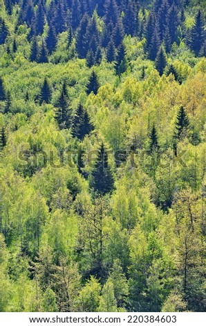 Abundant green forest - stock photo