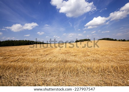 agricultural field on which there passed the harvest company of wheat - stock photo