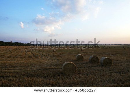 agricultural field where harvesting is carried out cereal, Belarus, summer - stock photo
