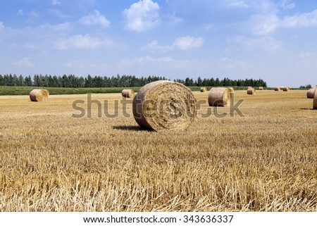 agricultural field where the straw after the harvest piled into bales - stock photo