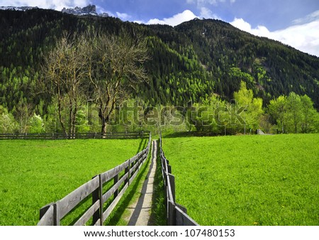 alpine meadow is looking into the sun - stock photo