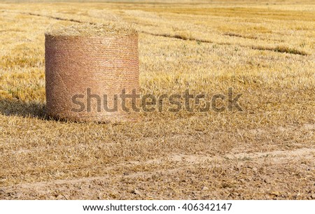 an agricultural field on which are laid out straw haystacks after the harvest of cereals, wheat - stock photo