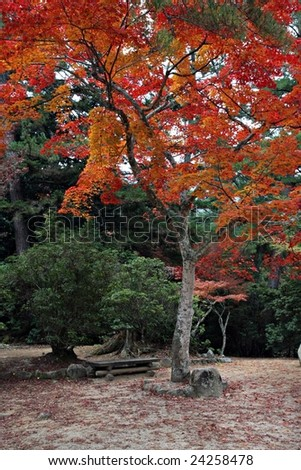Autumn Colors in  Japan - stock photo