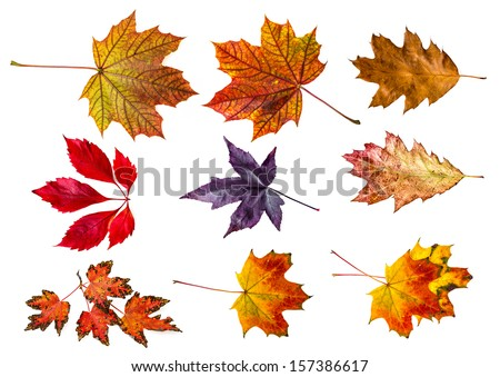 autumn leaves - collection - stock photo