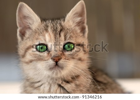 baby cat with green eyes - stock photo