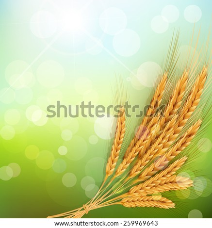 background with gold ears of wheat and sun rays - stock photo
